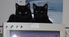 computer_cats-003