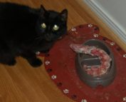 Even Alfie chowed down on some Turkey. What part of the turkey could that be??? Hmmm I wonder.....
