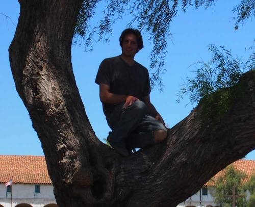 Lisanti in a Tree