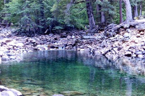 Yosemite Forest Stream