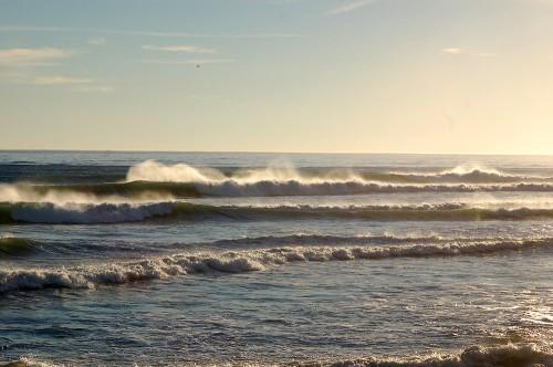 Napleswave